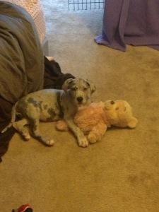 Adorably Sick Puppy Update...